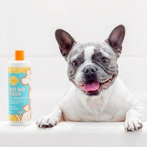 Honey & Chamomile Scentsy Shampoo für Haustiere